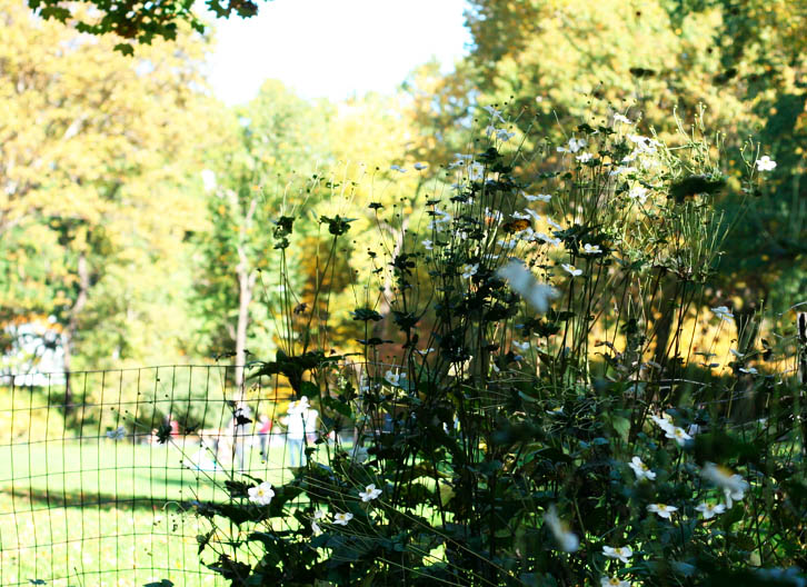 centralparkflower
