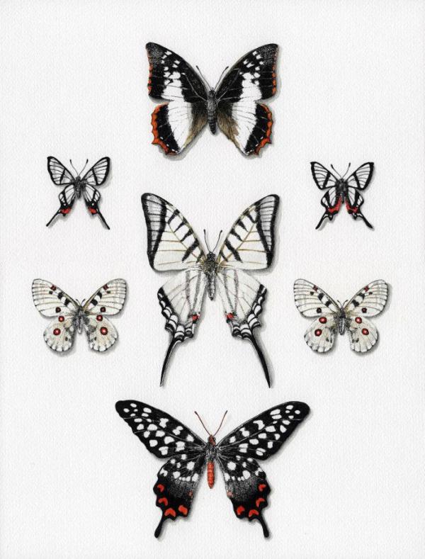 Papillons4