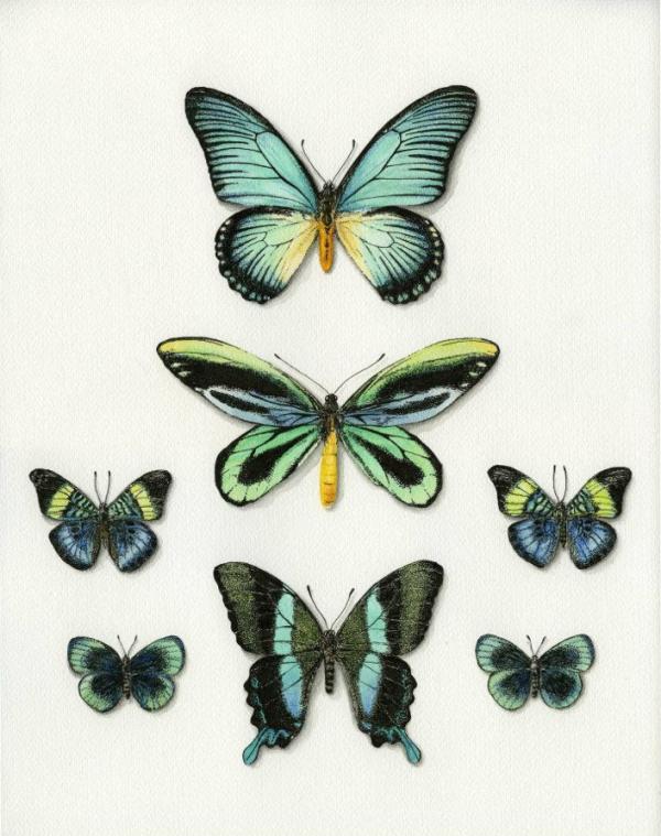 PapillonsLaetitia