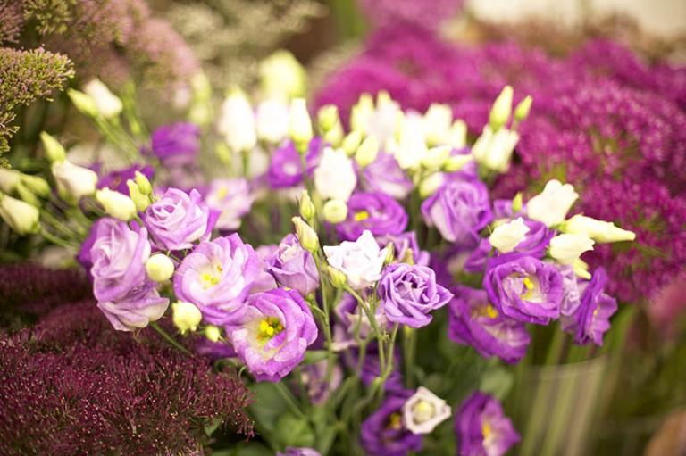 FlowerMix5